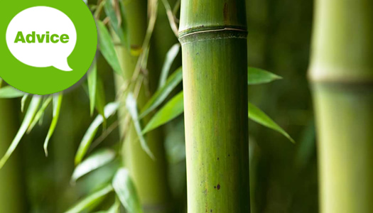 How To Plant A Bamboo In A Container Or Pot